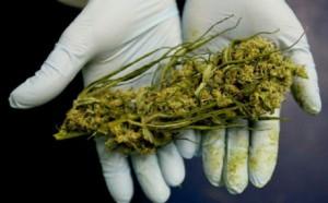 cannabis-ak