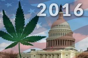 white-house-cannabis