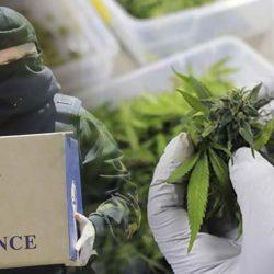 dea-cannabis