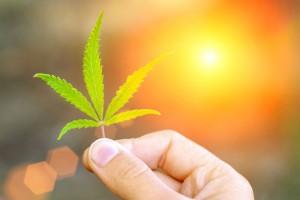 healing-cannabis