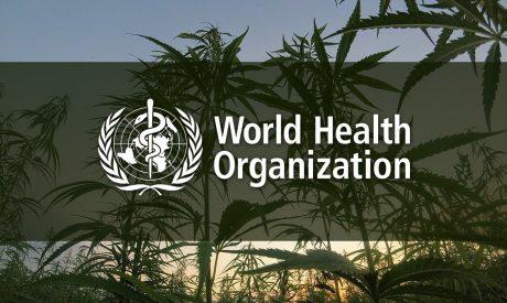 World Health Organization Won't Regulate CBD, Recommends Rescheduling Cannabis